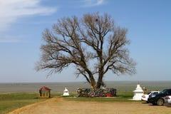 在干草原的孤立白杨树 卡尔梅克共和国,俄罗斯的神圣的树 库存照片