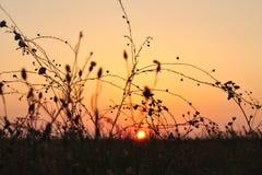 在干草原的日出 图库摄影