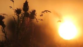 在干草原的日落 股票视频