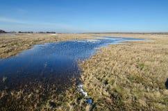 在干草原的春天洪水 免版税库存照片