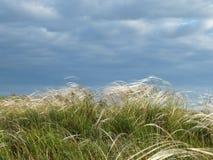 在干草原的针茅 免版税库存照片