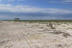 在干草原的长木凳 在长凳是旅游背包 木眺望台 天空蔚蓝,用小壳包括的土地,干草原 免版税库存照片