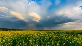 在干草原的风暴 库存图片