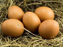在干草堆的五个鸡蛋 免版税库存照片