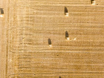 在干草堆的鸟瞰图麦田的 库存照片