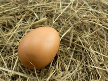 在干草堆的鸡蛋 库存图片