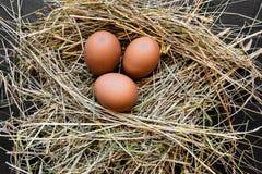 在干草巢的三个布朗鸡鸡蛋 免版税库存照片