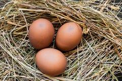 在干草巢的三个布朗鸡鸡蛋 免版税库存图片
