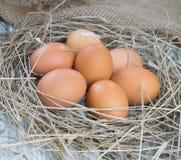 在干草巢的红皮蛋 免版税库存照片