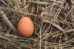 在干草巢的鸡鸡蛋在室外 免版税库存照片