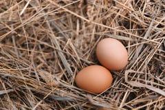 在干草巢的鸡鸡蛋在室外 免版税图库摄影
