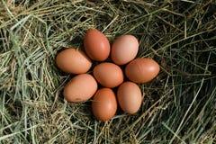 在干草巢的鸡鸡蛋 免版税库存照片
