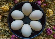 在干草废弃物的新鲜,自然土气白色鸡鸡蛋  免版税库存照片