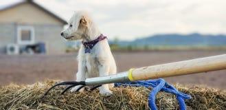 在干草捆的逗人喜爱的小狗 免版税库存照片