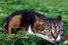 在干草的一只小的猫在攻击之前 免版税库存图片