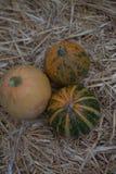 在干草的南瓜汇集 秋天收获秋天装饰、秋天庆祝、明信片和海报背景 库存照片