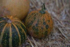 在干草的南瓜汇集 秋天收获秋天装饰、秋天庆祝、明信片和海报背景 库存图片