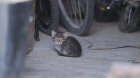 在干草的猫取暖在阳光下