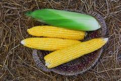 在干草的玉米庄稼 免版税库存图片