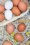 在干草的白色和黄色鸡蛋 库存照片