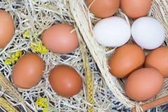 在干草的白色和黄色鸡蛋 免版税库存照片