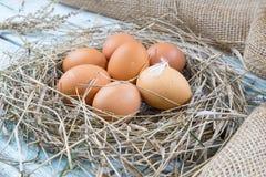 在干草的红皮蛋 免版税库存图片