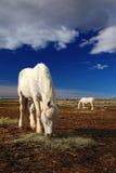 在干草的美味的白马饲料与马在背景,深蓝天空中与云彩 库存图片