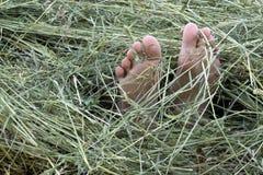在干草的脚 免版税库存图片