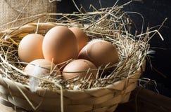在干草篮子的鸡蛋 免版税库存照片