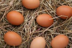 在干草背景的新鲜的鸡鸡蛋 库存照片