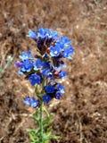 在干草背景的花  库存照片