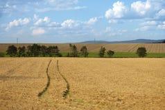在干草领域的足迹 库存照片