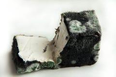 在干酪的模子 被损坏的速食 乳制品 免版税库存照片