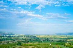 在平原沿爱琴海, Selcuk,土耳其的农田 库存图片