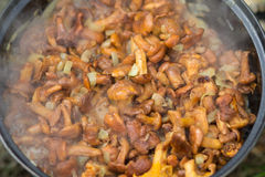 在平底锅油煎的黄蘑菇蘑菇 库存图片