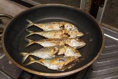在平底锅的油煎的鲭鱼 库存图片