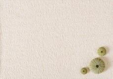 在平的白色沙子的海胆壳浮出水面 免版税图库摄影