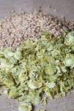 在平纹细布的琥珀色的麦芽和夏天蛇麻草 库存图片