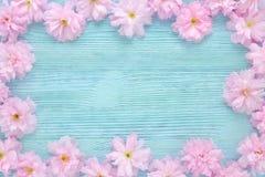 在平蓝色木的背景的桃红色樱桃鲜花框架 免版税库存图片