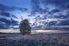 在平静的欧石南丛生的荒野的暮色场面, Goirle,荷兰 免版税库存图片