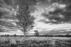 在平静的欧石南丛生的荒野的秋天暮色风景,Goirle,荷兰 库存图片