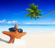 在平静的海滩夏天海岛概念的海星 库存图片