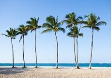 在平静的海滩的棕榈树 免版税库存照片