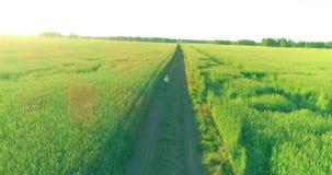 在年轻男孩,那的鸟瞰图通过麦子草地骑自行车在老农村路 阳光和射线 影视素材