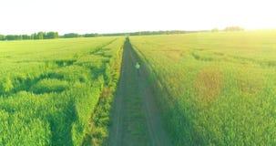 在年轻男孩,那的鸟瞰图通过麦子草地骑自行车在老农村路 阳光和射线 股票录像