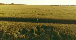 在年轻男孩,那的鸟瞰图通过麦子草地骑自行车在老农村路 阳光和射线 股票视频