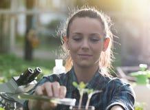 在幼木的农夫妇女倾吐的化学制品 免版税图库摄影