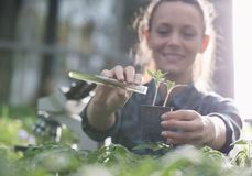 在幼木的农夫妇女倾吐的化学制品 免版税库存照片
