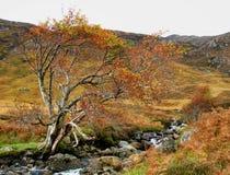 在幽谷Affric的秋天颜色 库存图片