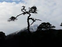 在幽谷Affric的苏格兰松树 免版税库存图片